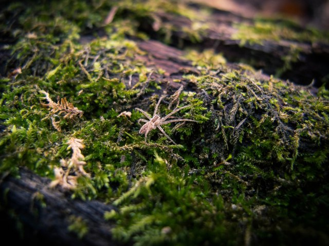 spider on mossy log