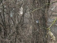 Kingfisher-5