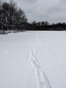 Lone Trail
